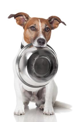 Dog carrying food bowl on his mouth